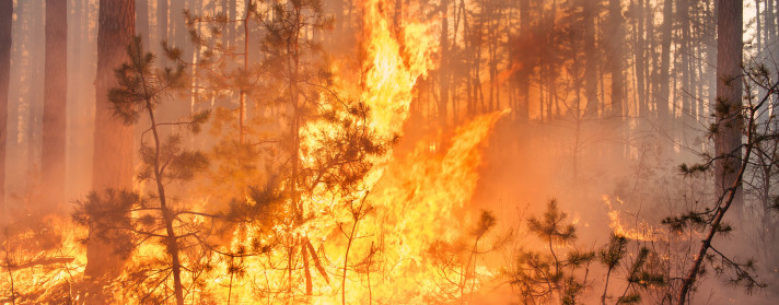 Do Wildfires Fall Within the Realm of Homeowners Insurance Coverage?